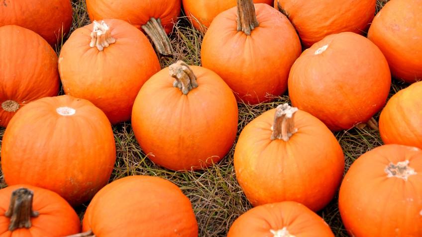 pumpkins-848x477
